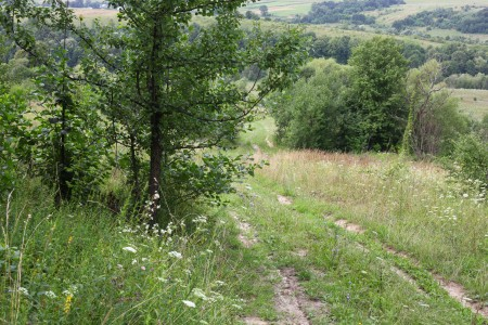 Meadows and woods about 30 km from Lviv, Ukraine, Europe, picture 16