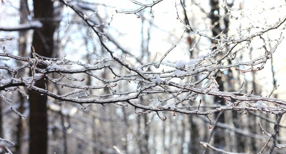 trees with their branches covered with ice, photo 2