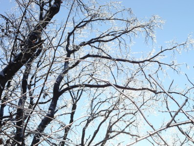 trees with their branches covered with ice, photo 3