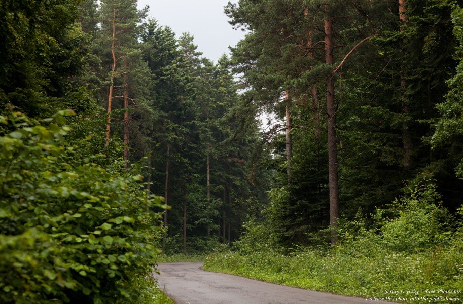 a forest in the south-east of Poland in July 2017, picture 1