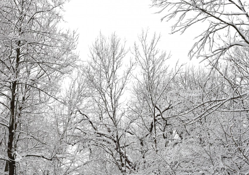 forest in snow in December 2012, photo 7