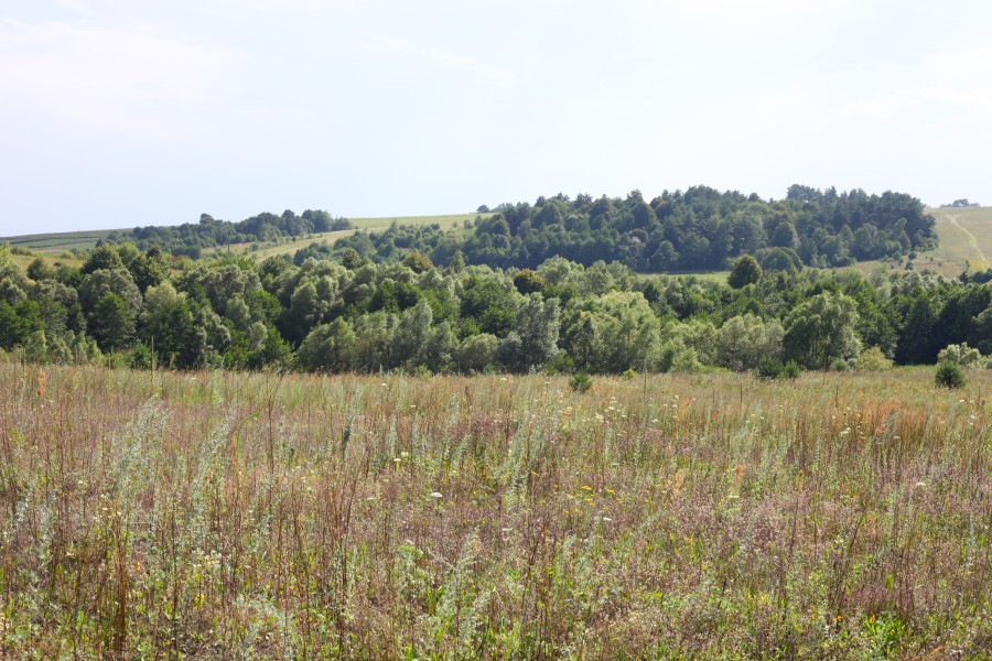 Meadows and woods about 30 km from Lviv, Ukraine, Europe, picture 13