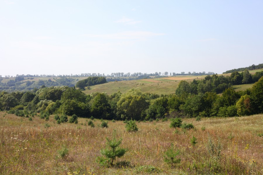 Meadows and woods about 30 km from Lviv, Ukraine, Europe, picture 15