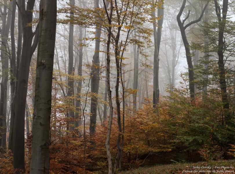 nature in Lviv region of Ukraine photographed in October 2018 by Serhiy Lvivsky, picture 21