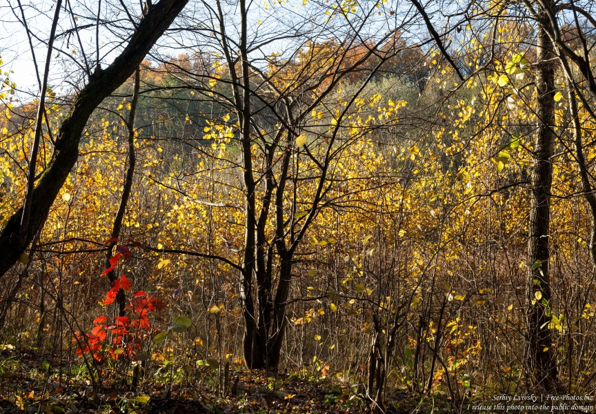 nature in Lviv region of Ukraine photographed in October 2018 by Serhiy Lvivsky, picture 26
