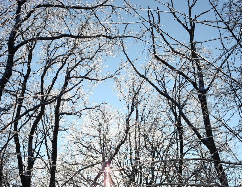 trees with their branches covered with ice, photo 1