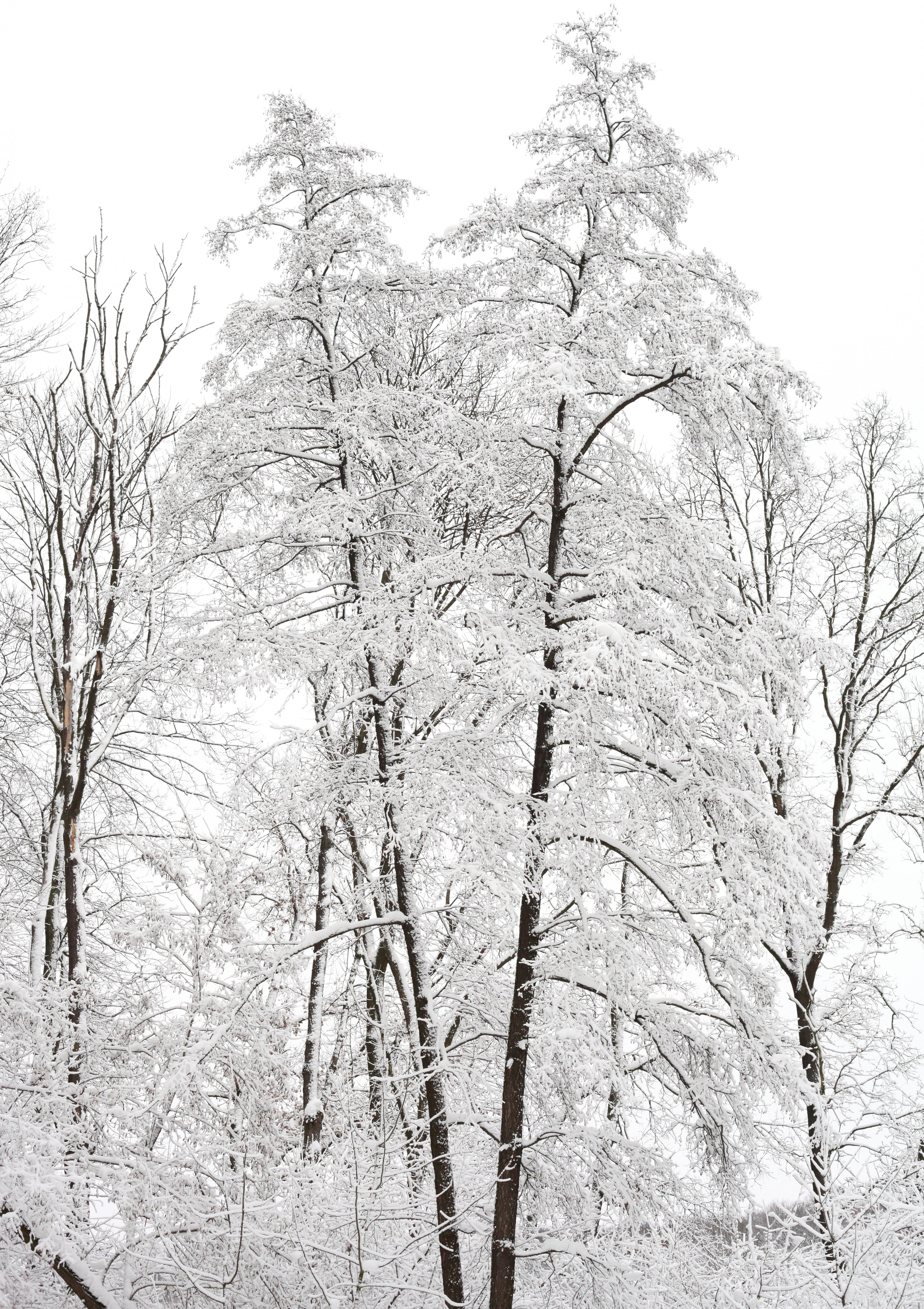 forest in snow in December 2012, photo 9