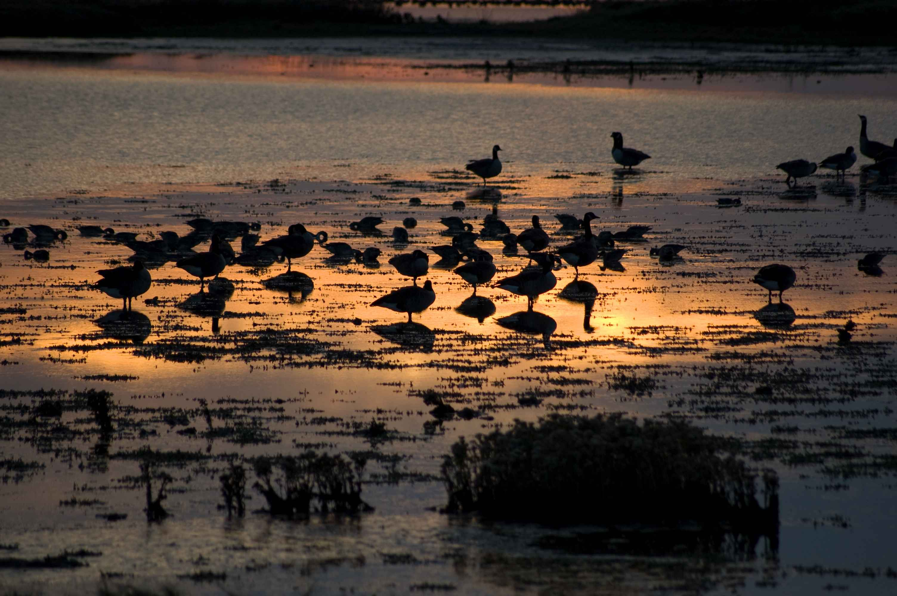 A view of various birds at sunset