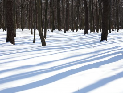 long tree shadows on the snow