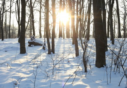 God's creation: snowy landscape on a sunny day, December 2012, picture 4