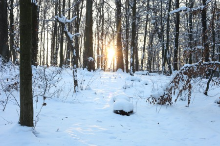 God's creation: snow in the forest in Lviv region, December 2012, photo 12