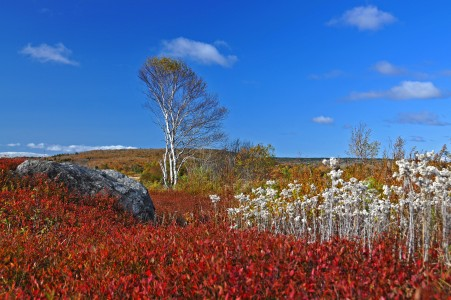 Wild blueberry fields in the fall near Parrsboro (2)