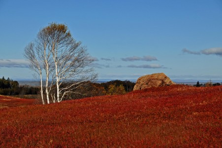 Wild blueberry fields in the fall near Parrsboro (3)