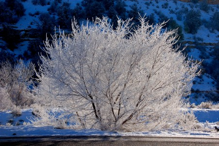 Winter tree covered by snow