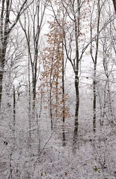 a snowy day in Lviv region of Ukraine in November 2020 photographed by Serhiy Lvivsky, picture 2