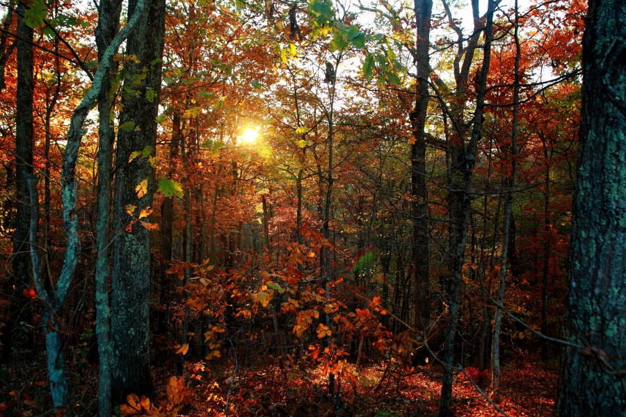 Autumn-trees-leaves-foliage-sunset - West Virginia - ForestWander