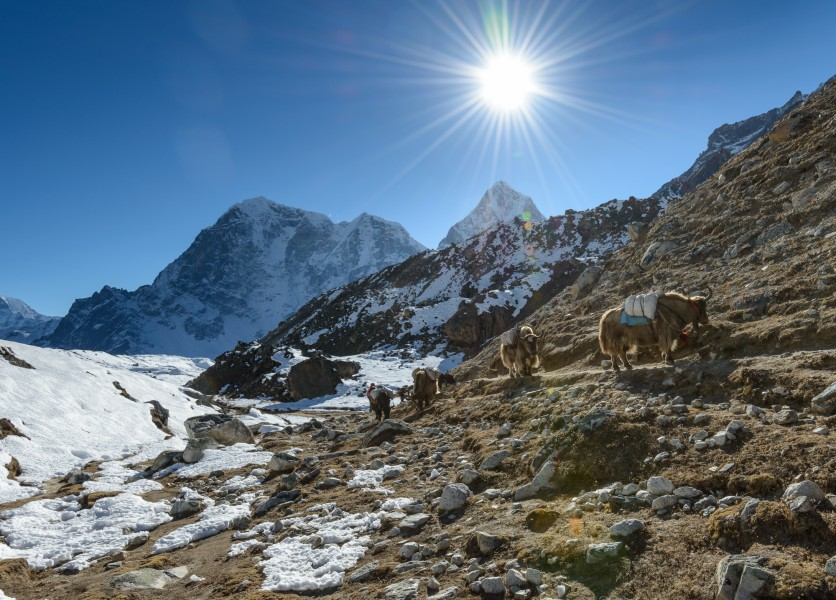 Going back from Everest Base Camp (15094746501)