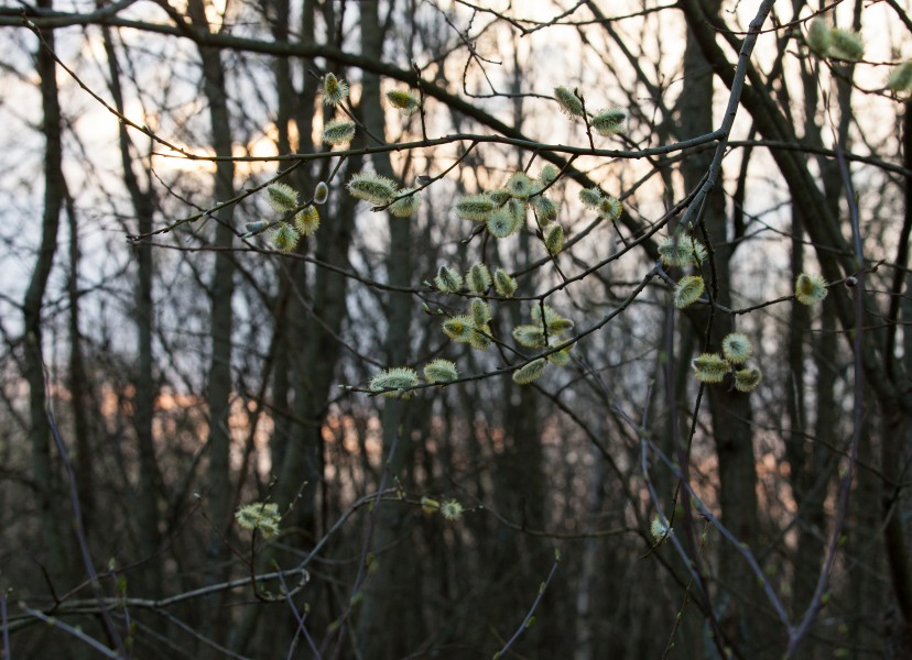 nature in Lviv region of Ukraine before the sunset in March 2014