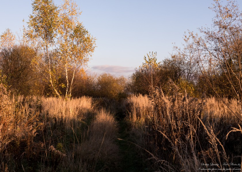 nature in Lviv region of Ukraine in November 2020 photographed by Serhiy Lvivsky, picture 5