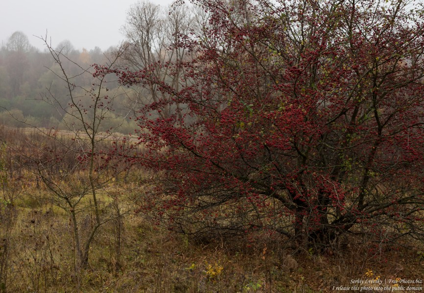 nature in Lviv region of Ukraine photographed in October 2018 by Serhiy Lvivsky, picture 22