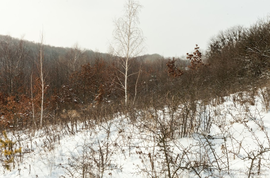 nature in Ostroh district of Rivne region of Ukraine photographed by Serhiy Lvivsky in January 2019, picture 4