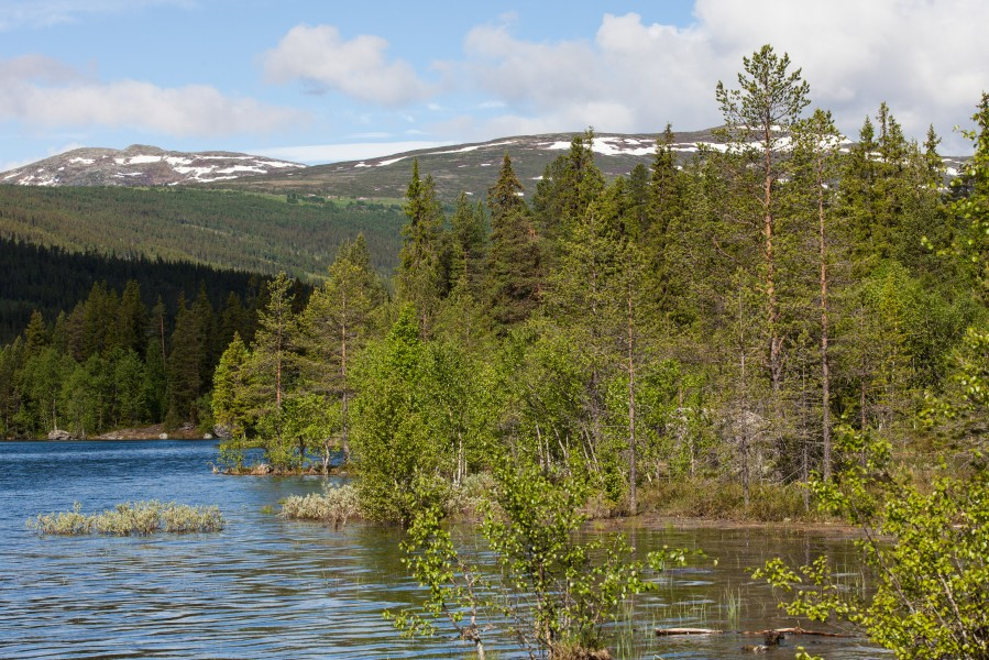 a Norway landscape, June 2014, picture 2