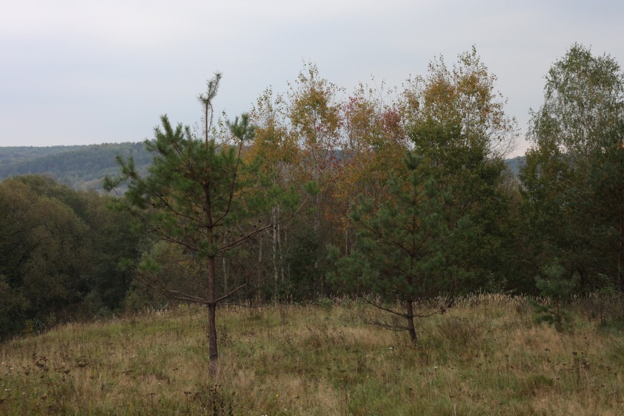 a landscape in the beginning of October 2012 in Lviv region of Ukraine, picture 2