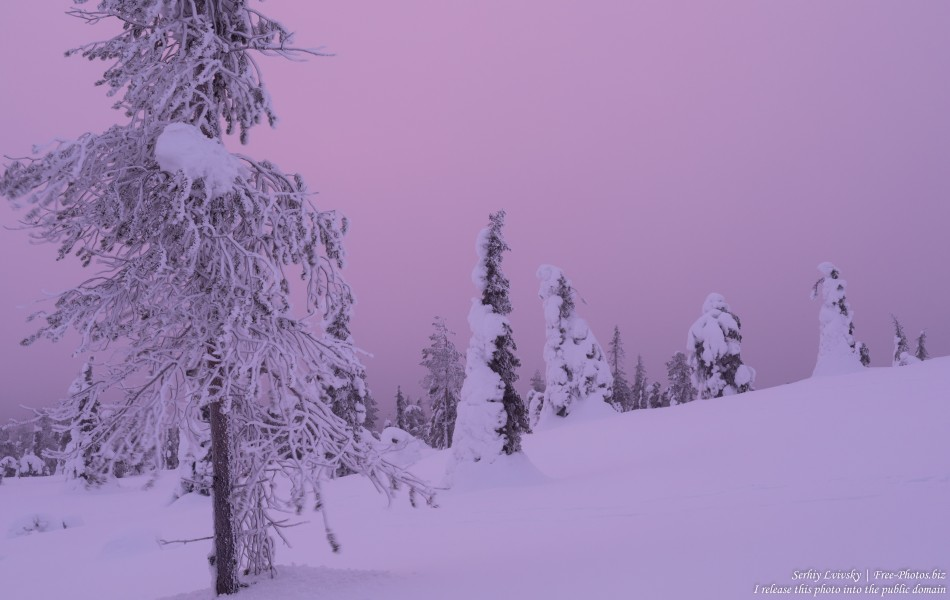 Riisitunturi, Finland, photographed in January 2020 by Serhiy Lvivsky, picture 3