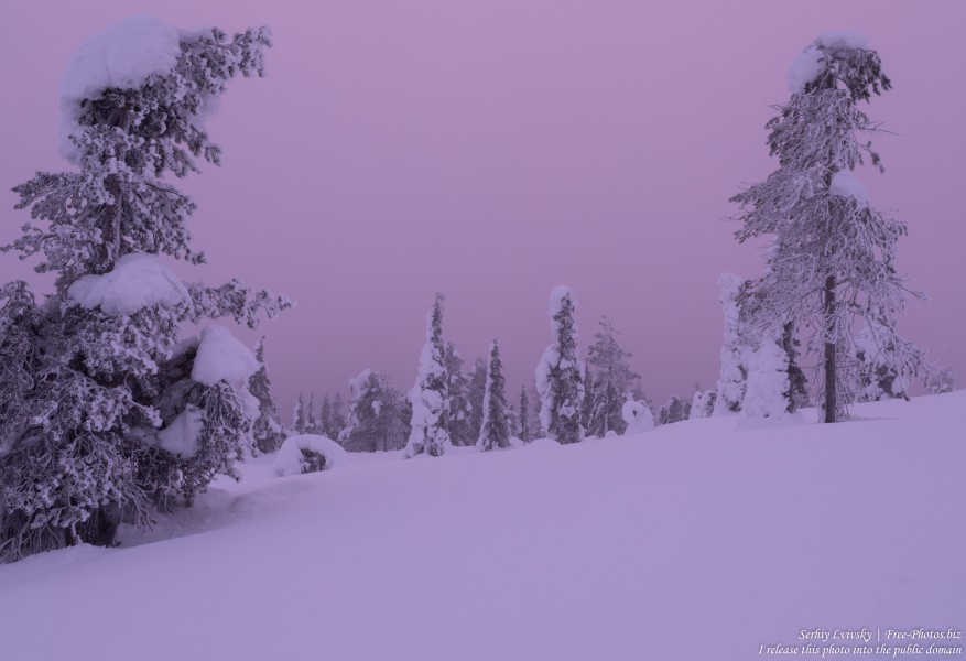 Riisitunturi, Finland, photographed in January 2020 by Serhiy Lvivsky, picture 4