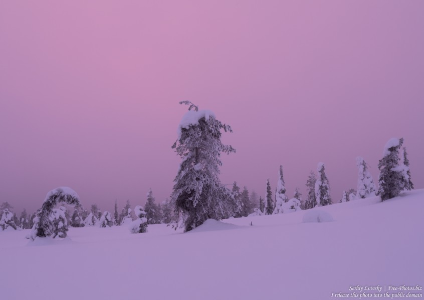 Riisitunturi, Finland, photographed in January 2020 by Serhiy Lvivsky, picture 5