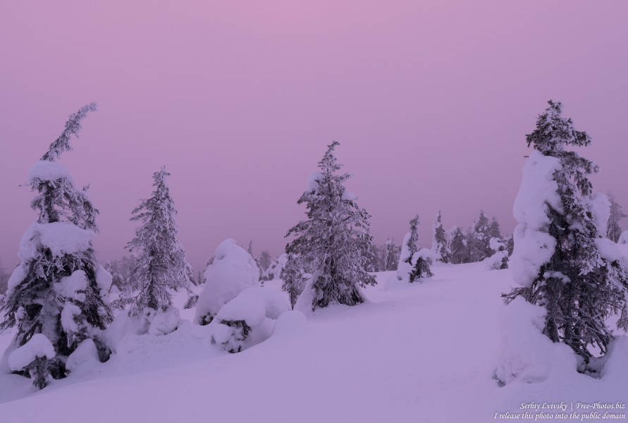 Riisitunturi, Finland, photographed in January 2020 by Serhiy Lvivsky, picture 6
