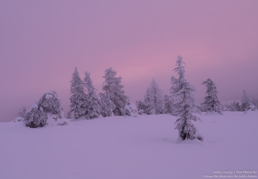 Riisitunturi, Finland, photographed in January 2020 by Serhiy Lvivsky, picture 10