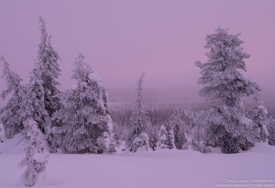 Riisitunturi, Finland, photographed in January 2020 by Serhiy Lvivsky, picture 12