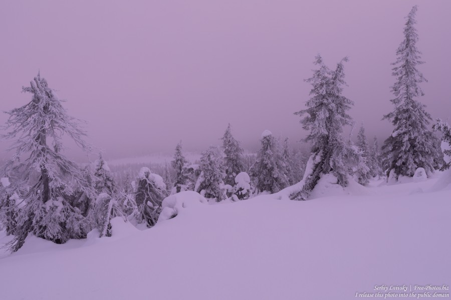 Riisitunturi, Finland, photographed in January 2020 by Serhiy Lvivsky, picture 13