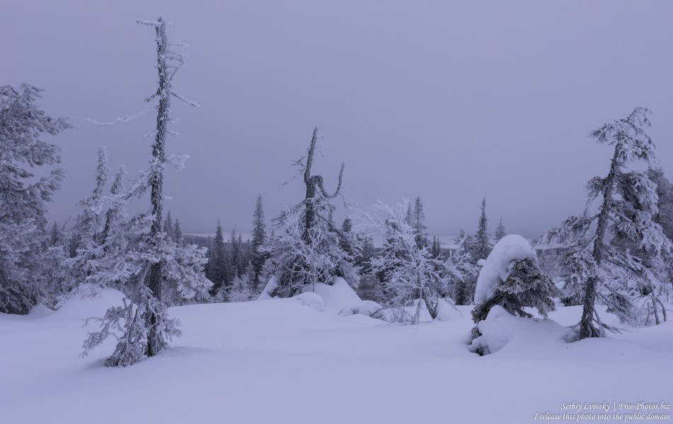 Riisitunturi, Finland, photographed in January 2020 by Serhiy Lvivsky, picture 14