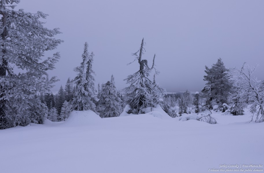 Riisitunturi, Finland, photographed in January 2020 by Serhiy Lvivsky, picture 15