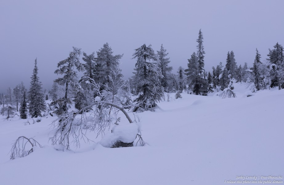 Riisitunturi, Finland, photographed in January 2020 by Serhiy Lvivsky, picture 16