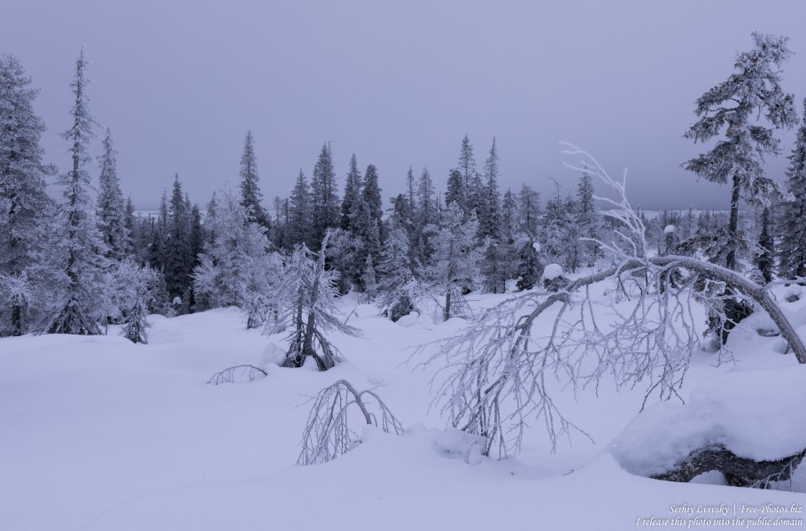 Riisitunturi, Finland, photographed in January 2020 by Serhiy Lvivsky, picture 17