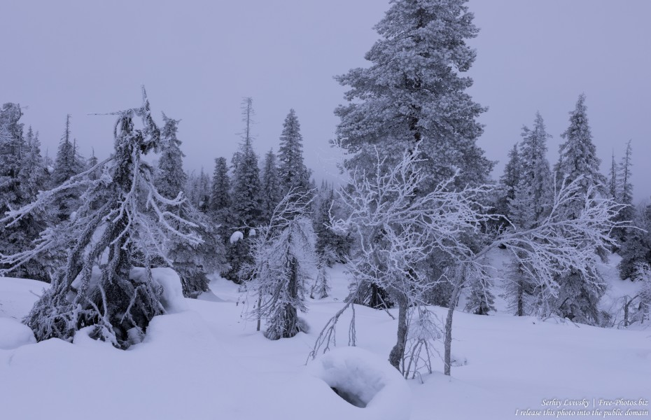 Riisitunturi, Finland, photographed in January 2020 by Serhiy Lvivsky, picture 18
