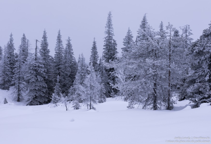 Riisitunturi, Finland, photographed in January 2020 by Serhiy Lvivsky, picture 19