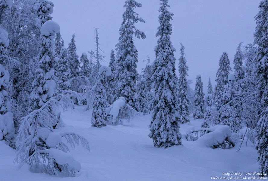 Riisitunturi, Finland, photographed in January 2020 by Serhiy Lvivsky, picture 21