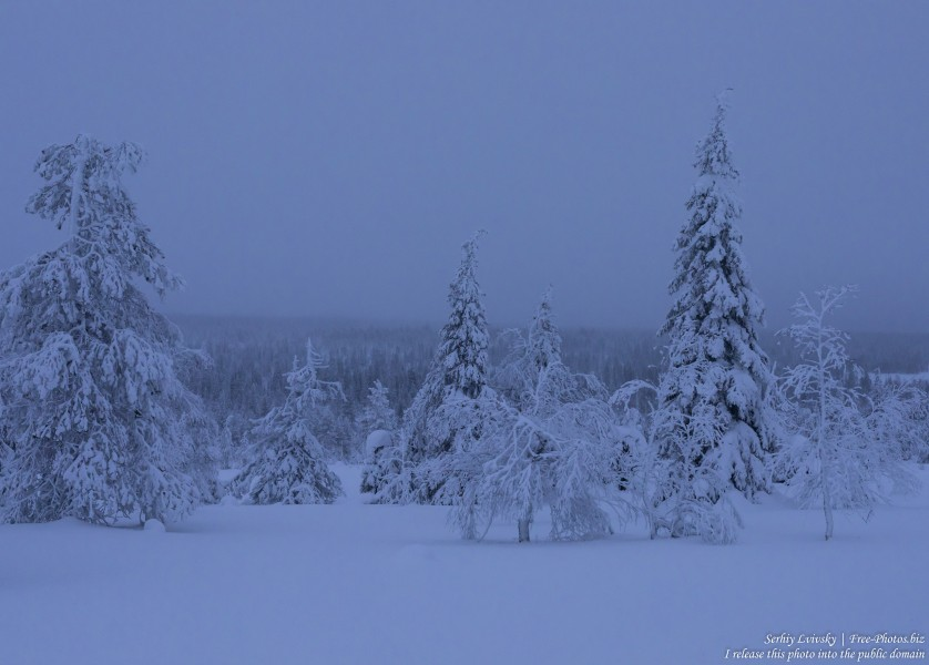 Riisitunturi, Finland, photographed in January 2020 by Serhiy Lvivsky, picture 22