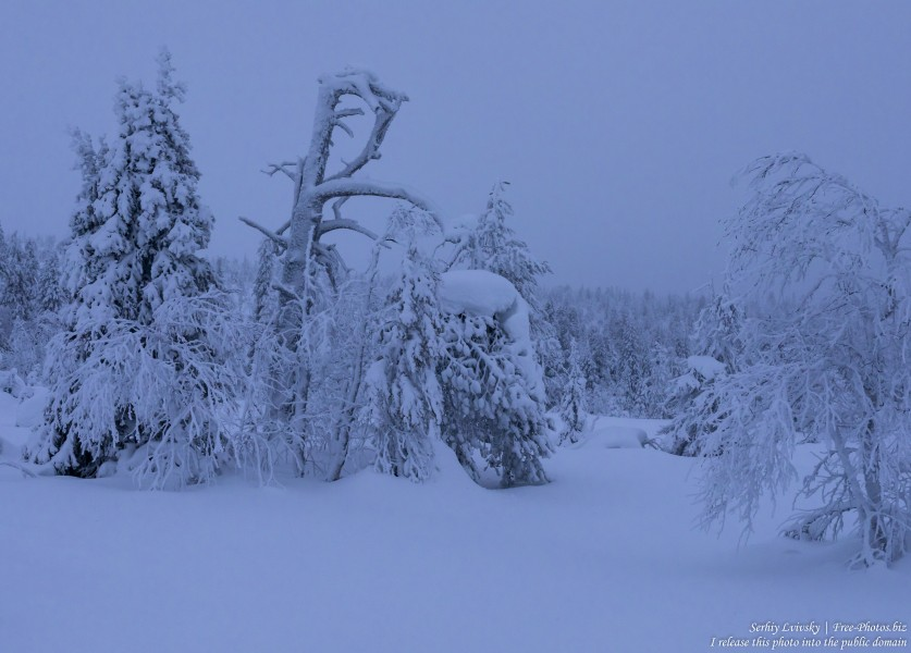 Riisitunturi, Finland, photographed in January 2020 by Serhiy Lvivsky, picture 23