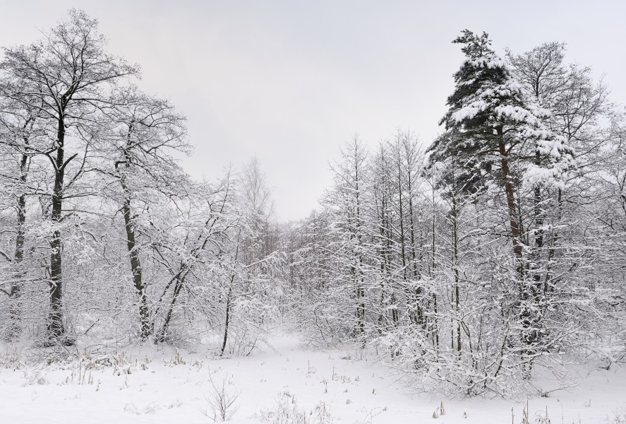 Russia. Moscow Region. Winter wood, lake Kratovskoe area