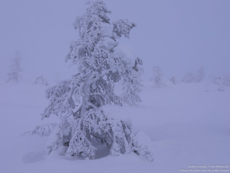 Sallatunturi, Finland, photographed in January 2020 by Serhiy Lvivsky, picture 7