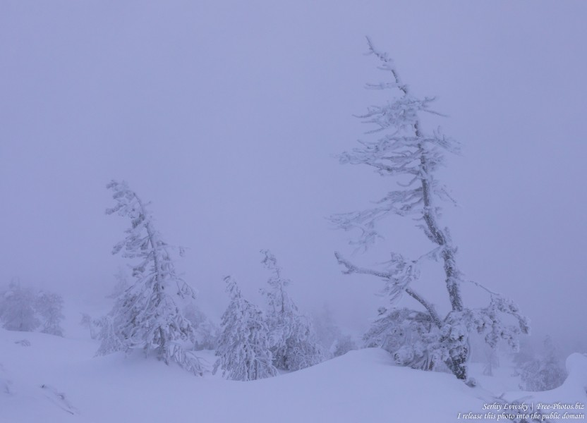 Sallatunturi, Finland, photographed in January 2020 by Serhiy Lvivsky, picture 8