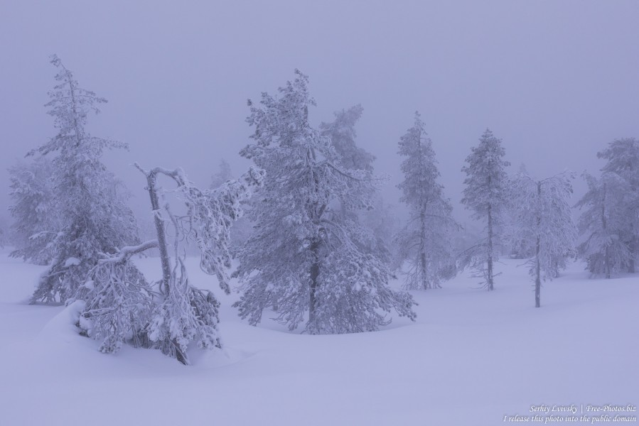 Sallatunturi, Finland, photographed in January 2020 by Serhiy Lvivsky, picture 9