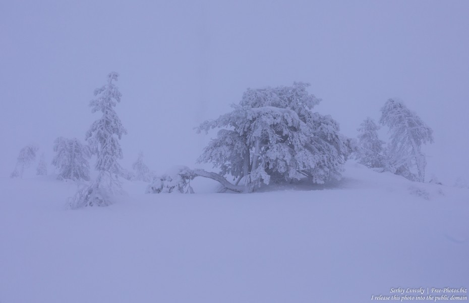 Sallatunturi, Finland, photographed in January 2020 by Serhiy Lvivsky, picture 10