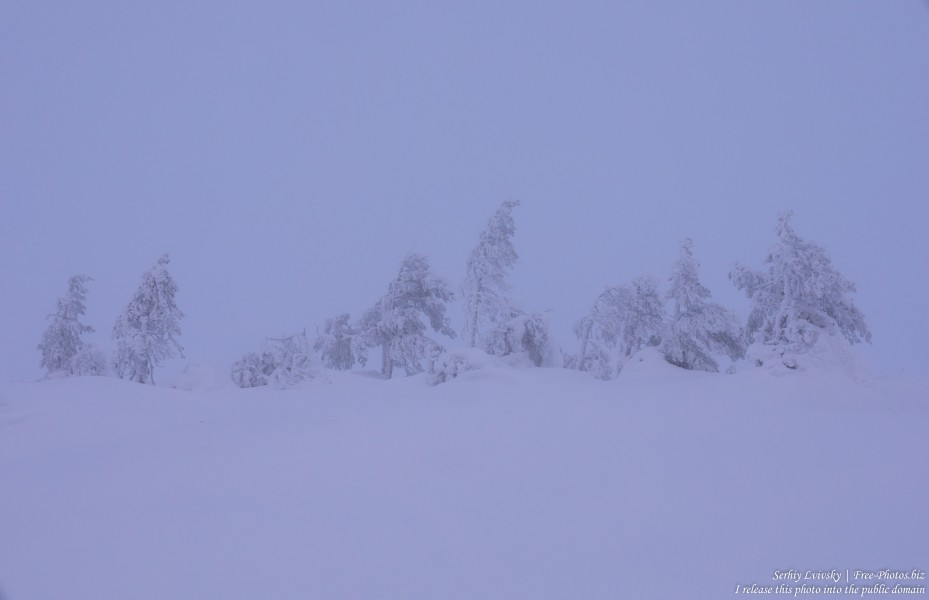 Sallatunturi, Finland, photographed in January 2020 by Serhiy Lvivsky, picture 11
