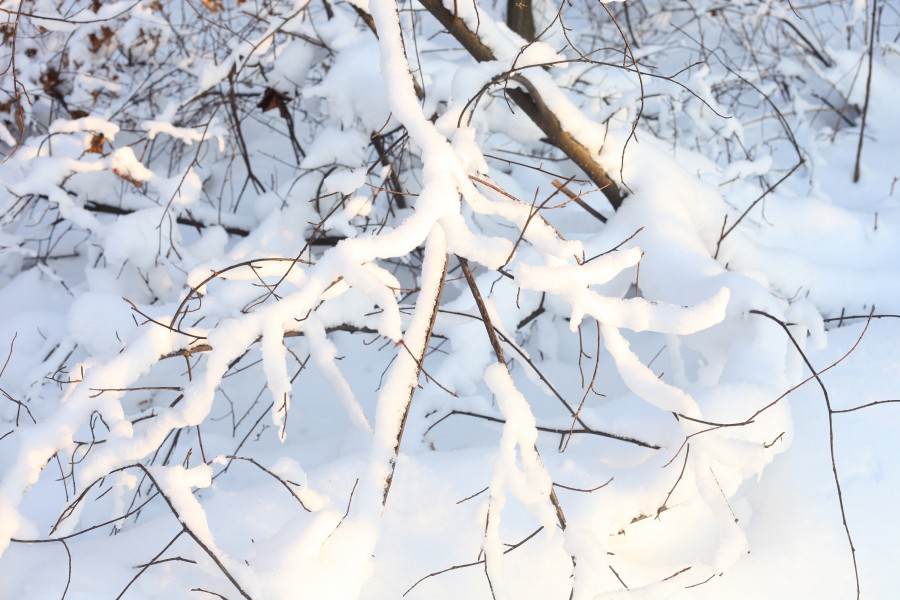 God's creation: snow in the forest in Lviv region, December 2012, photo 10